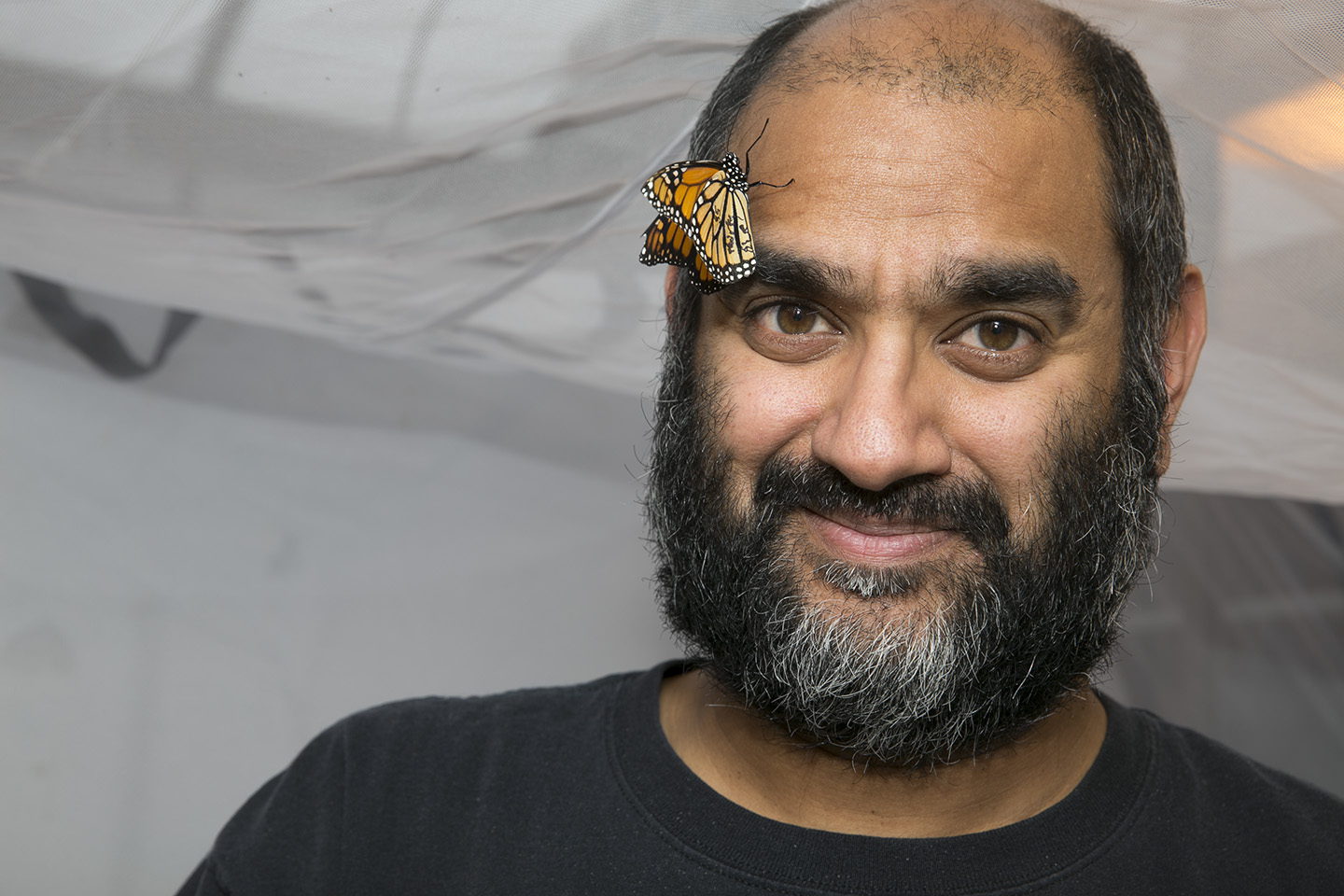 MacArthur Award winner Anurag A. Agrawal, with butterfly. Image credit, Frank DiMeo