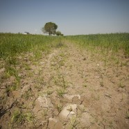 Call for nominations for land degradation and restoration assessment