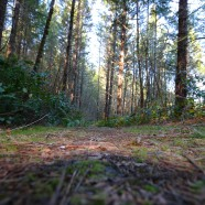 Government: Plan for ecosystem services