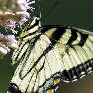 IPBES Pollinators Assessment Released
